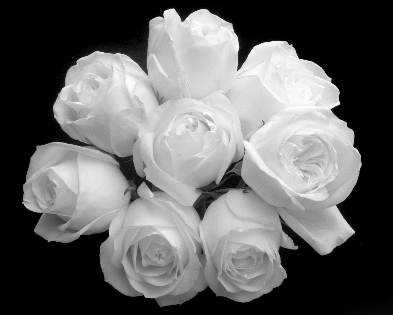 Desktop Wallpapers Nature Fresh Beautiful Bouquet White Roses