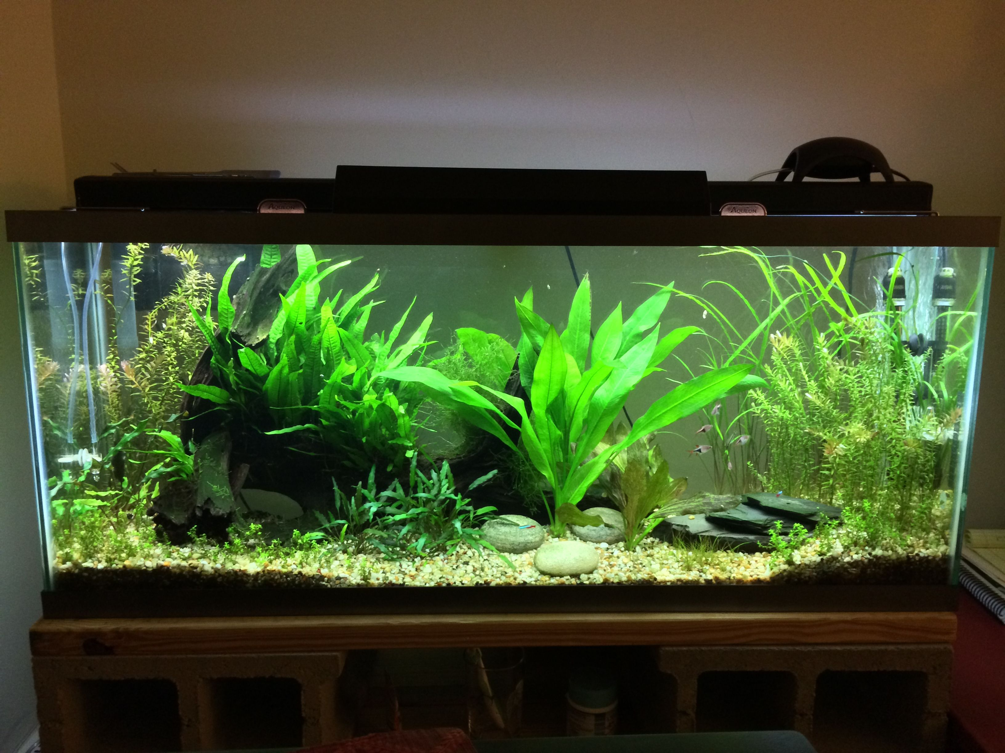 Aug right after moving and resetting the tank