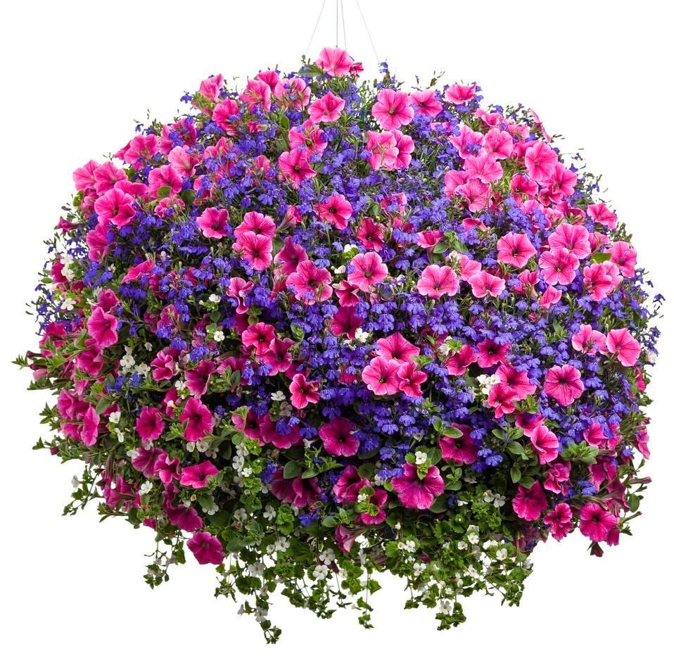 Pin By حكاية العمر كله On Flowers Market Hanging Plants Container Flowers Hanging Garden