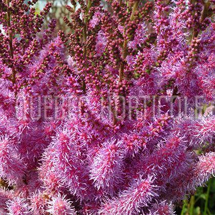 Photos de plantes et fiches descriptives détaillées ...