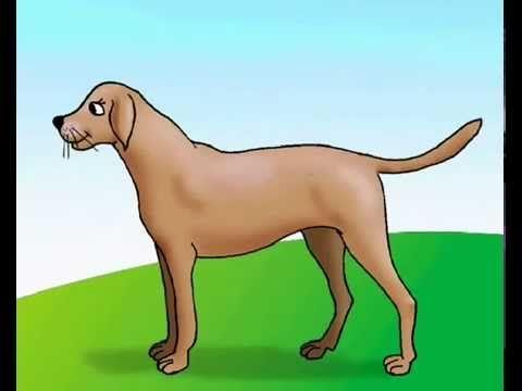 تعليم الاطفال الطيور و الحيوانات Animals Dinosaur Stuffed Animal Scooby Doo