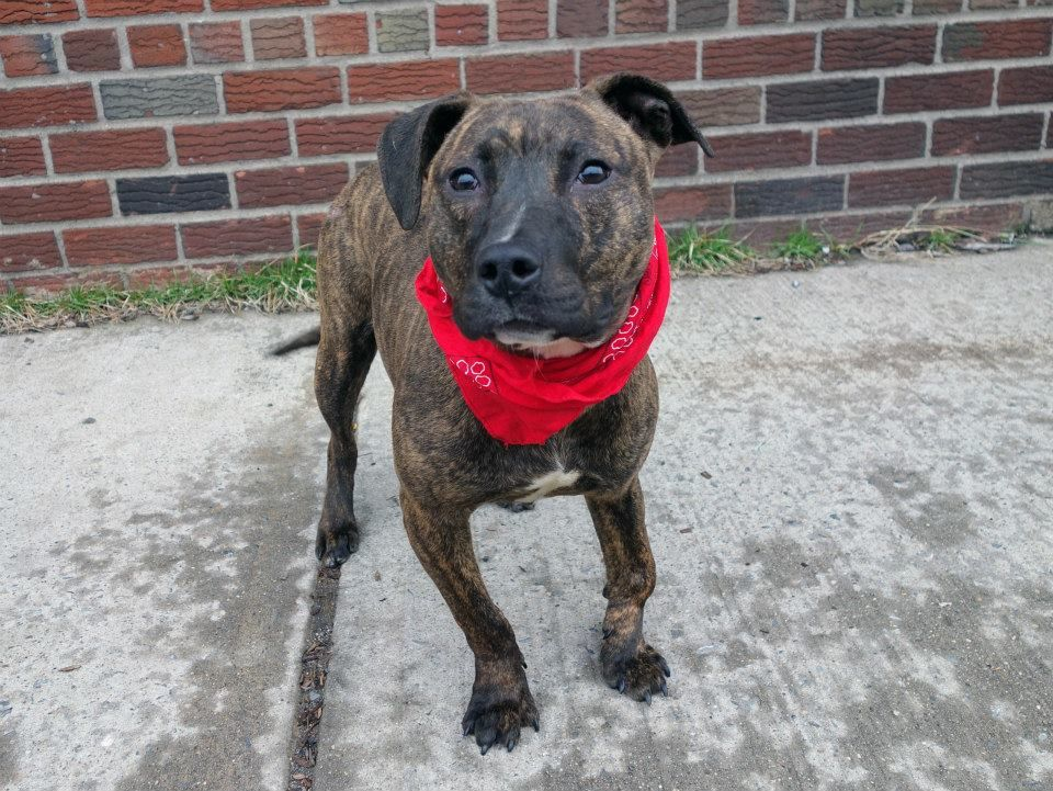 Pin auf NY/NJ Local Dogs In Dire Need of Rescue/Foster