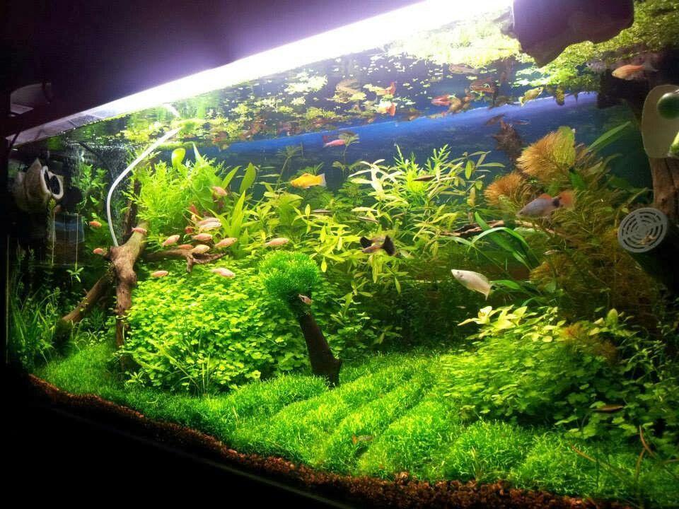 Beautiful Aquascape | Nature aquarium, Planted aquarium ...