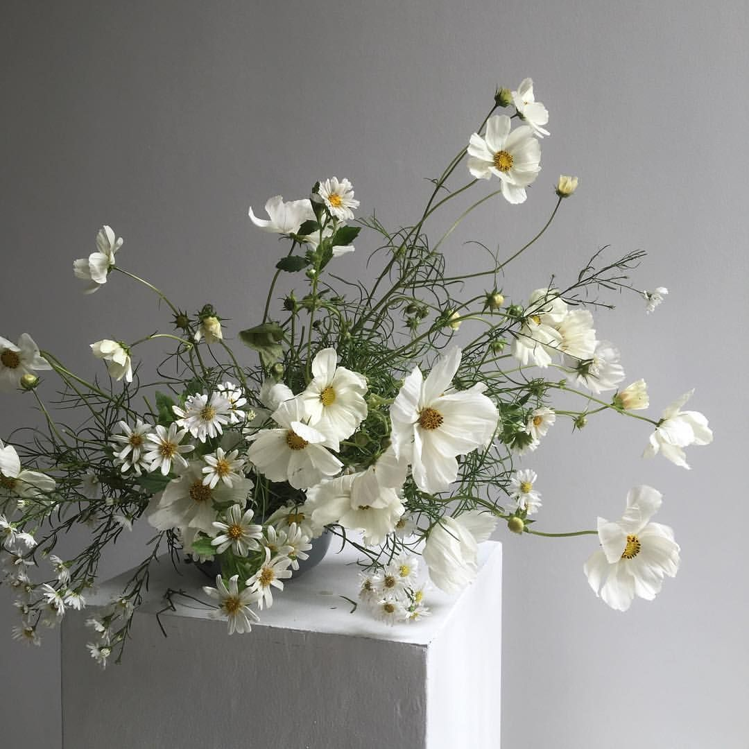 Wedding Flowers Cairns: Pin By Maryfrances Cairns On Flower Arrangments