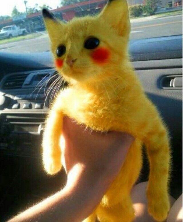 Painted Baby Kitten Pikachu