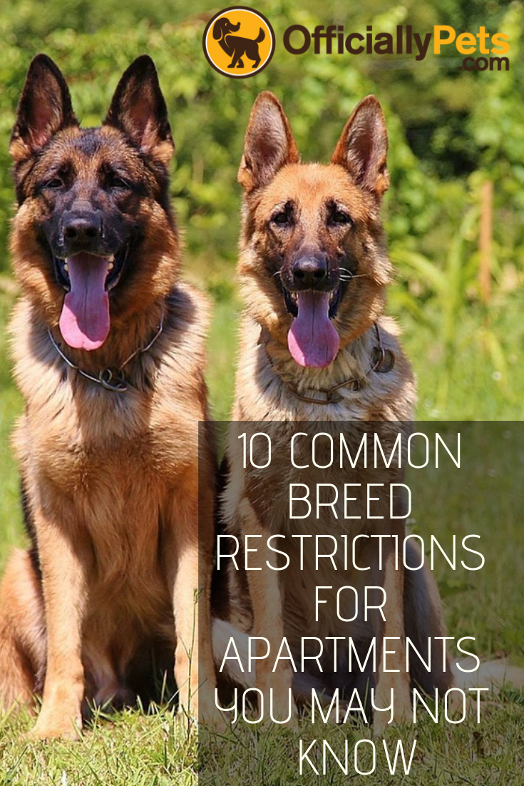 10 Common Breed Restrictions For Apartments That You Might Not Know Make Sure Re Actually Allowed To Bring Home Your New Pooch