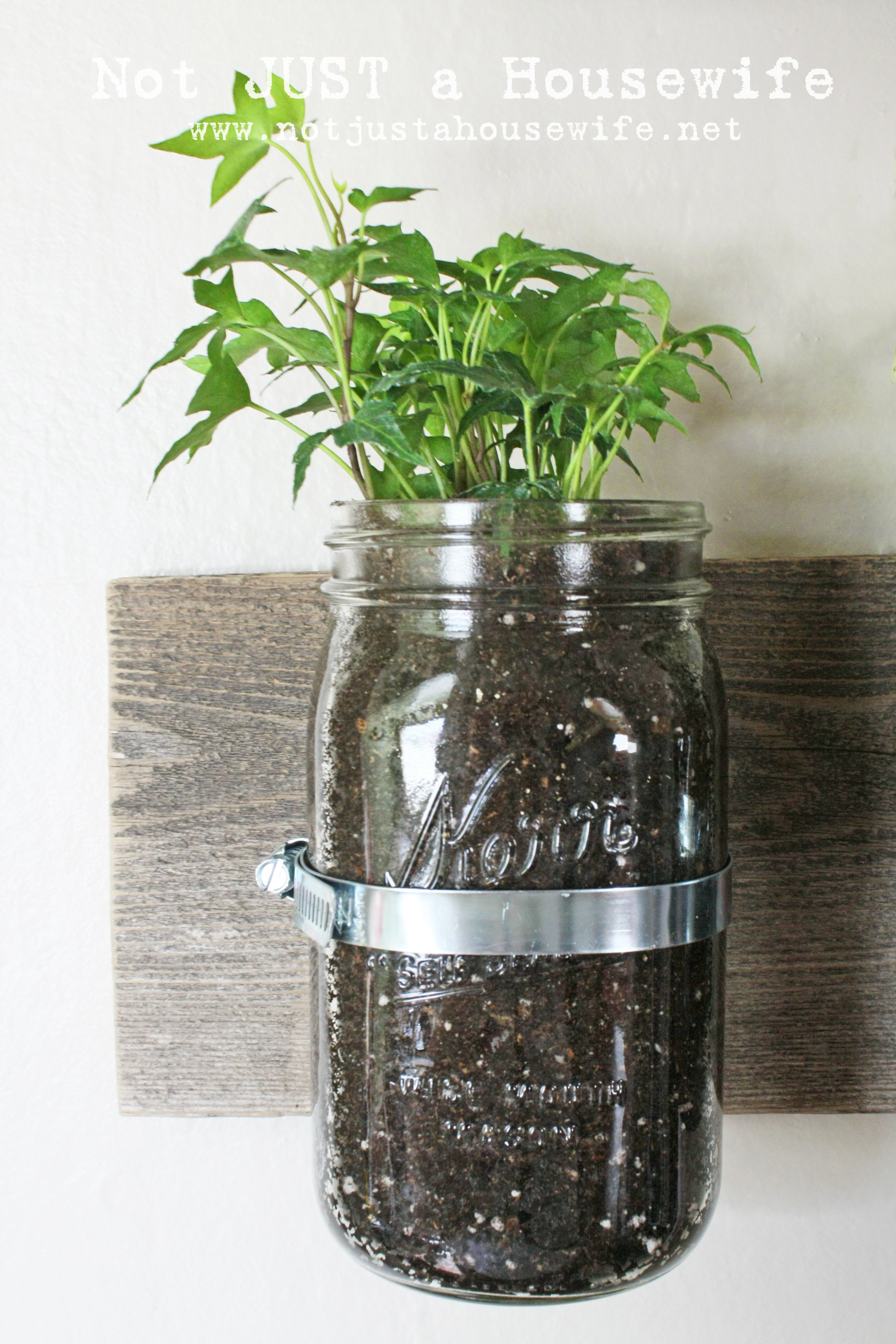 Mason Jar Wall Planter Stacy Risenmay