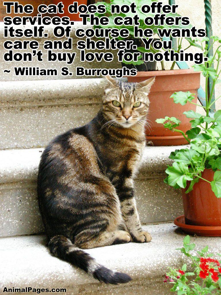 cat-quote-18 | furr kids | Cat quotes, Cats, Dog cat