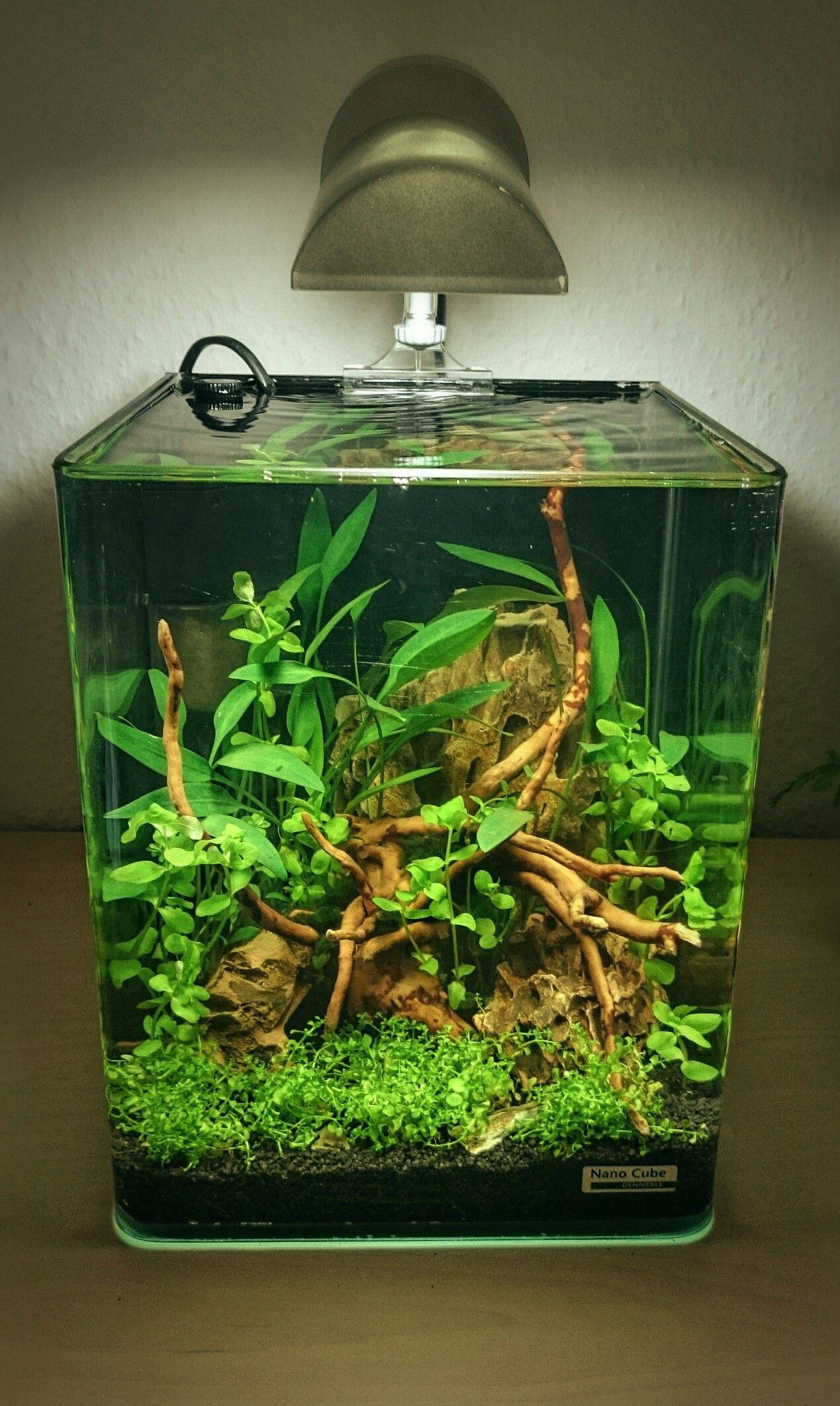 Aquarium Haustierbedarf 60l Aquarien