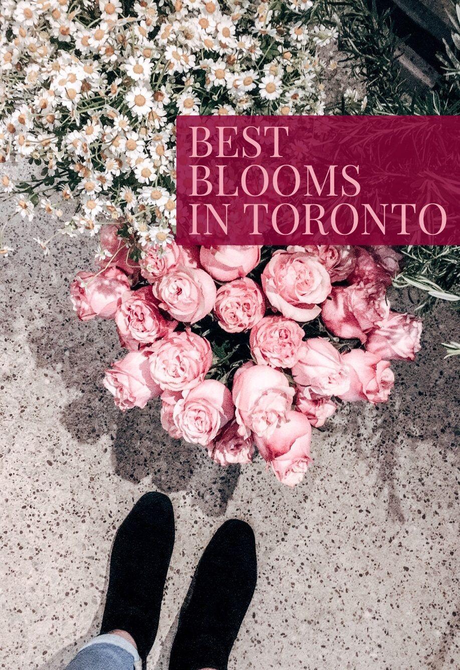 5 Fantastic Flower Shops in Toronto Flowers, Baby
