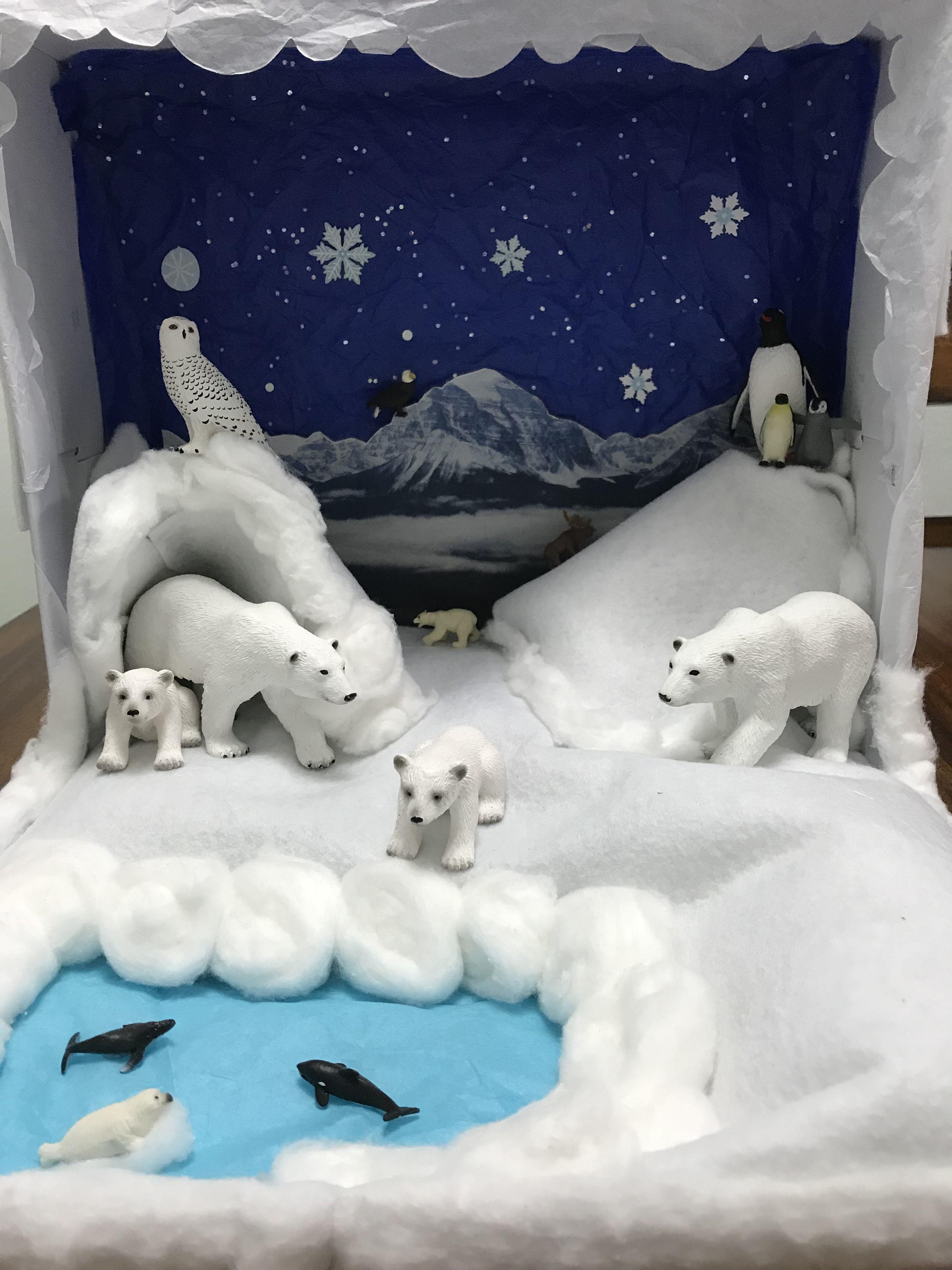 Polar Bear Diorama Kindergarten Haustier Projekt Dioramen Projekte Fur Kinder