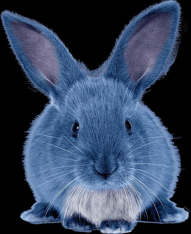 Blue Rabbit Images