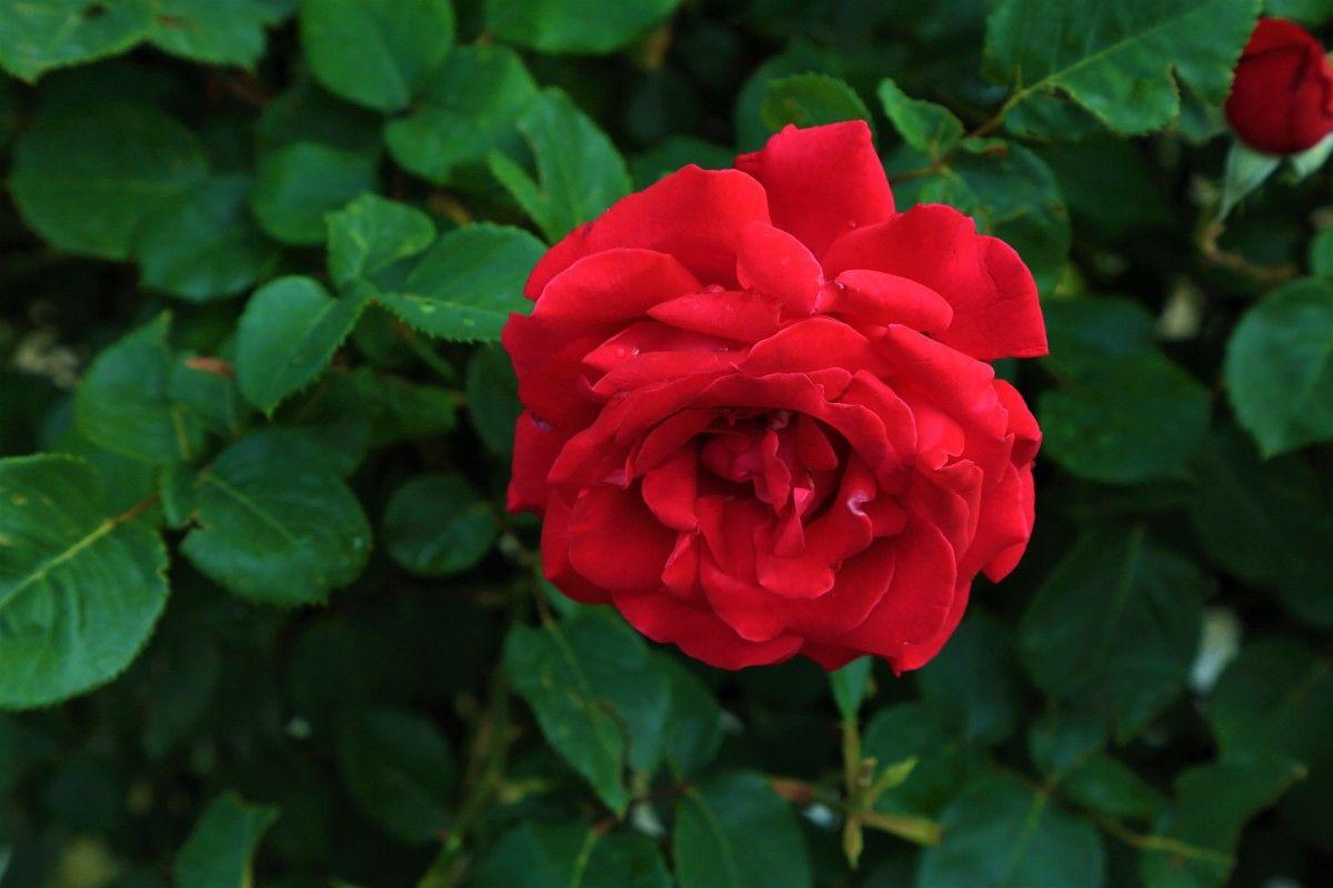 صور رومانسية اجمل صور حب غرام خيالية Flowers Plants Image