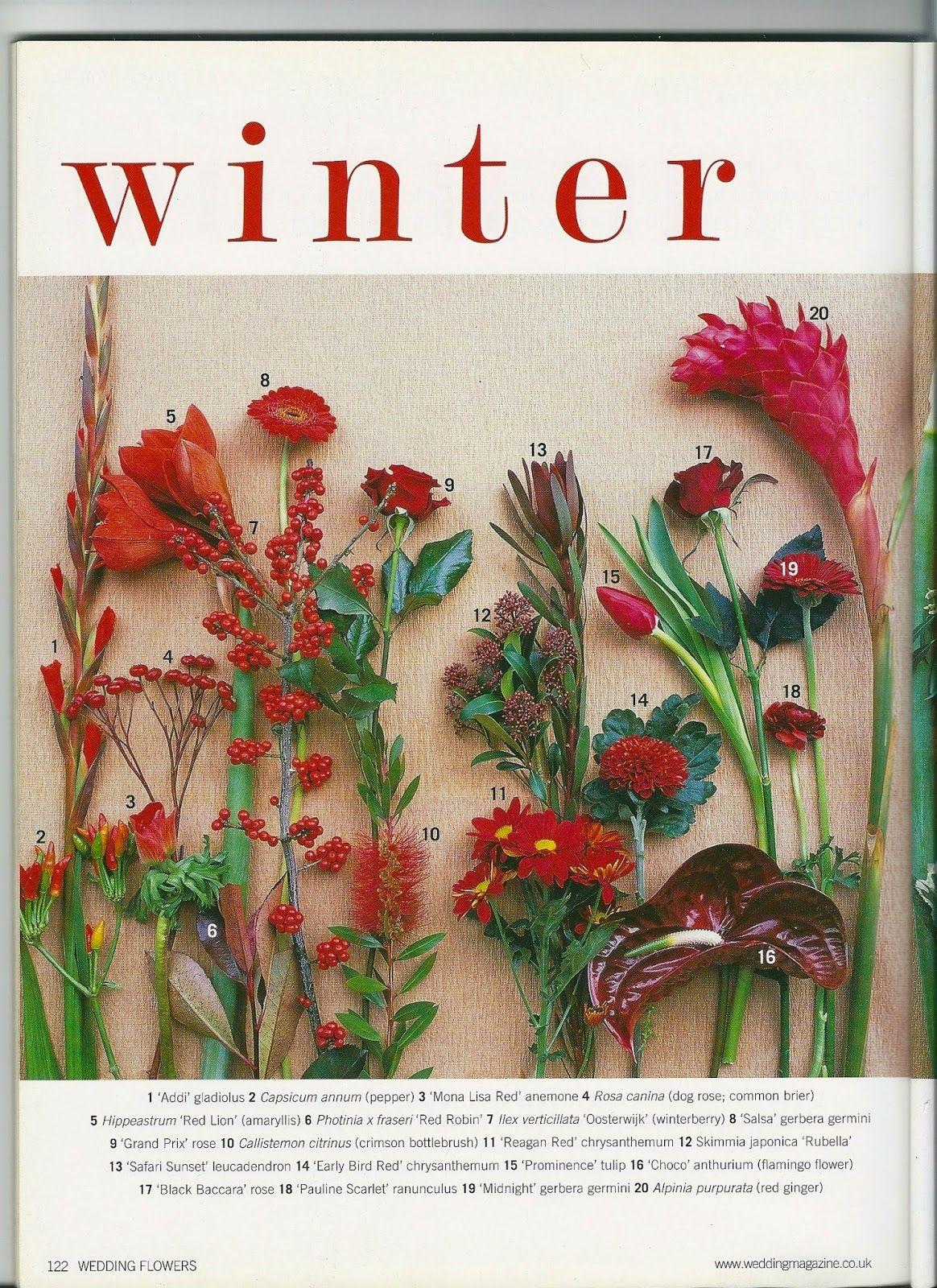 Blog Florystyczny Flower Arrangements Amaryllis Flowers