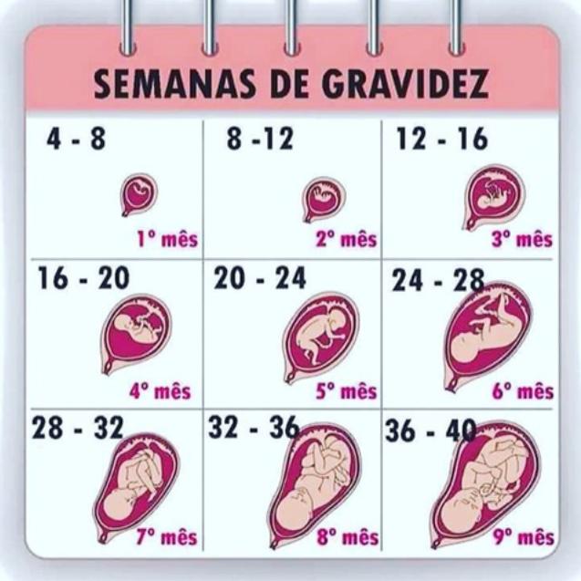 imagenes feto 34 semanas embarazo
