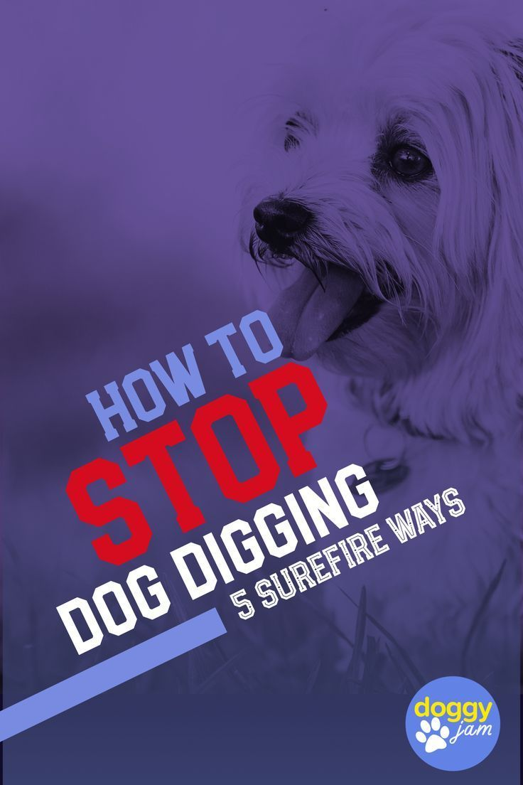 5 surefire ways to stop your dog from digging dog