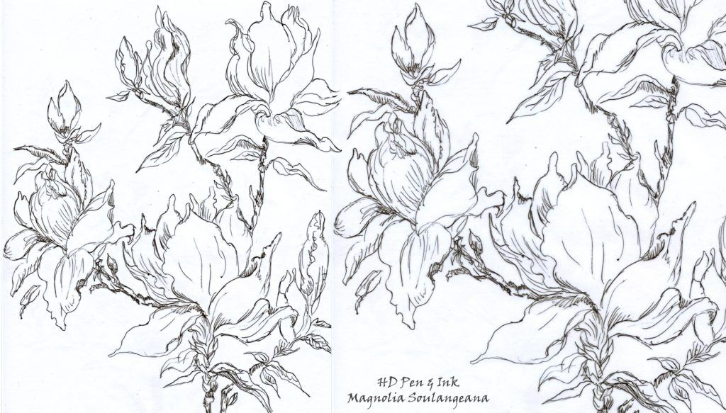 Flowering Magnolia Tree Stencil Design Inspirations Tree
