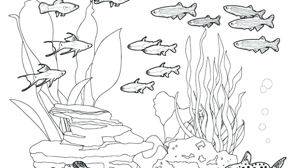 Animal Habitat Coloring Pages Ocean Habitat Coloring Pages Images