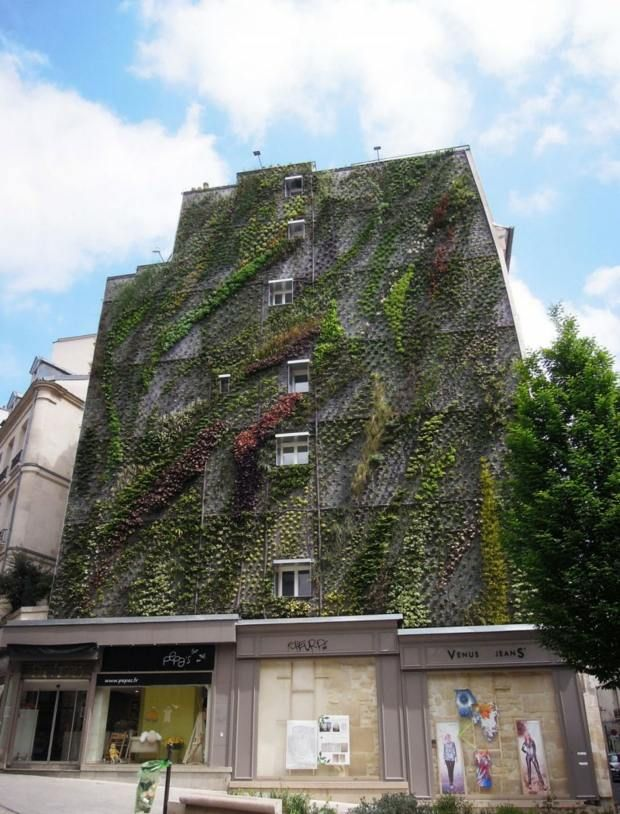 L\u0027Oasis d\u0027Aboukir  un mur végétal dans le centre de Paris Pinterest