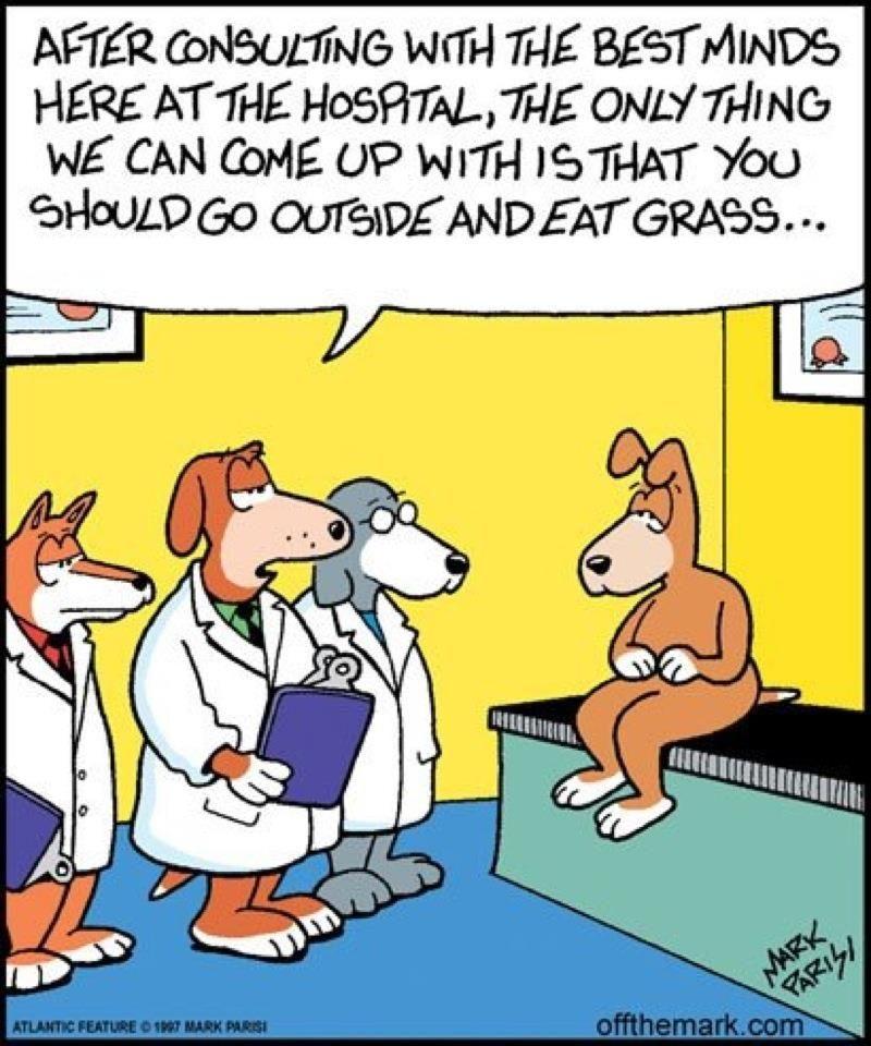 Eat Grass With Images Dog Jokes Cartoon Jokes Cartoon Dog