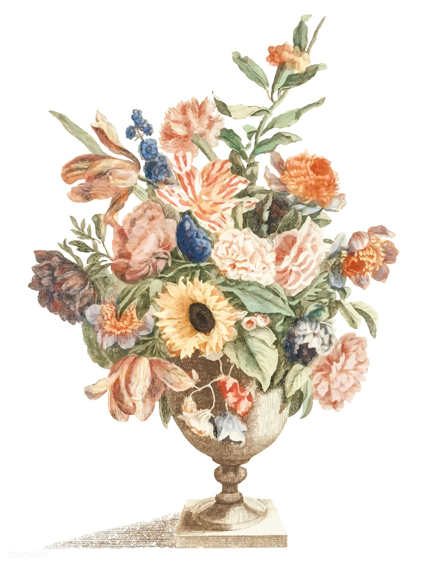 Vintage Illustration Of A Vase With Flowers Free Image By