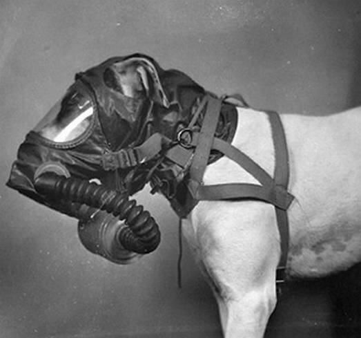 I know what you need… air of the dog! Photographs reveal how canines were fitted…
