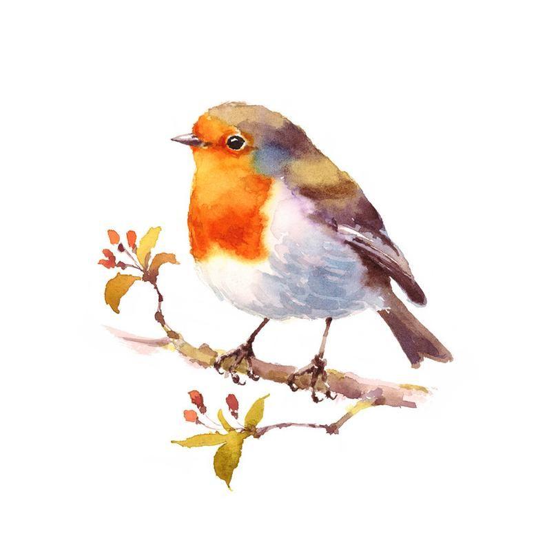 Ensemble De Peinture D Oiseau Ensemble D Impression D Oiseau D