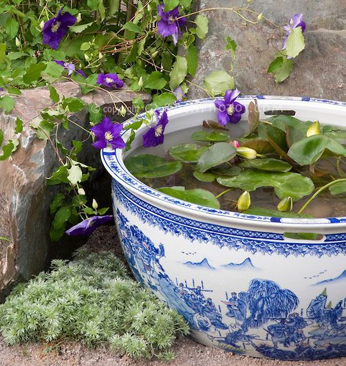 Planting tips ideas for a container water garden garden tiny water garden pot container in blue and white oriental style wedgewood color theme pattern bowl with clematis vine x jackmanii in purple flowers workwithnaturefo