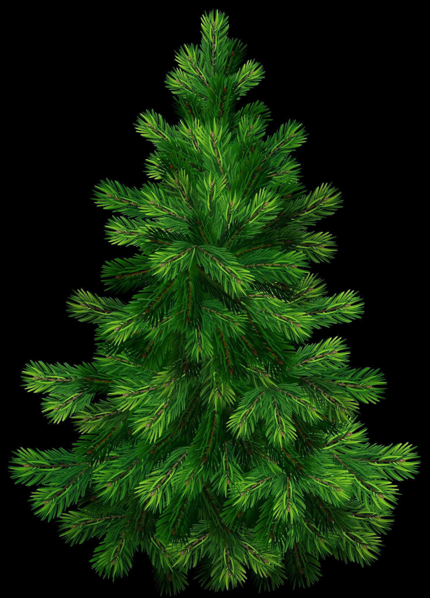 Real Christmas Tree Png Christmas Png Image Clipart Tree Illustration Tree Clipart Christmas Clipart