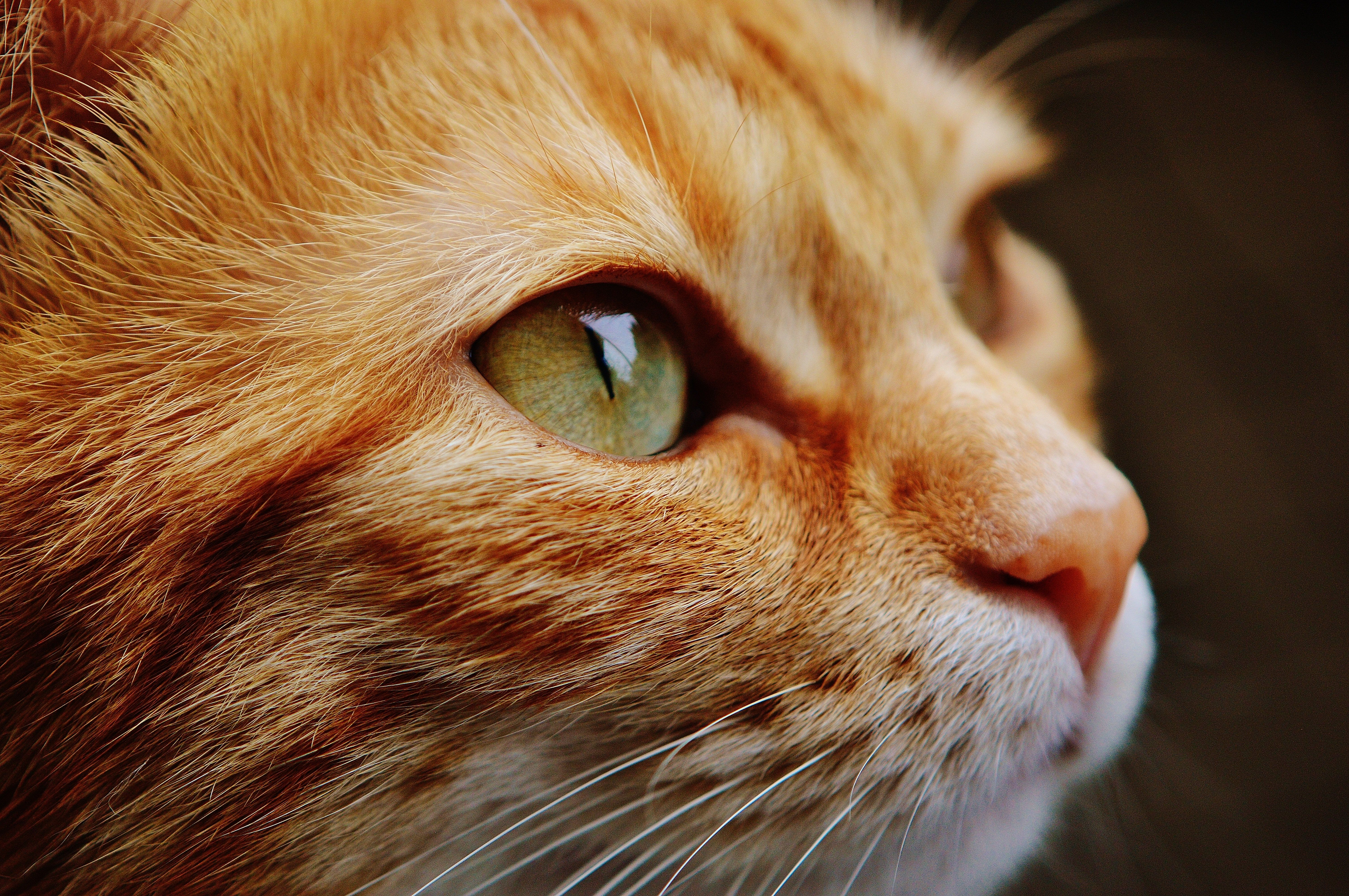 I Can See A Galaxy Shining Through My Kitty S Eyes In 2020 Cat Care Cats And Kittens Cats