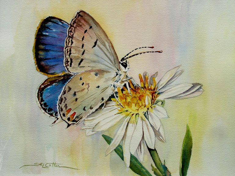 Watercolor Paintings Of Butterflies Wzf Small Blue Butterfly On