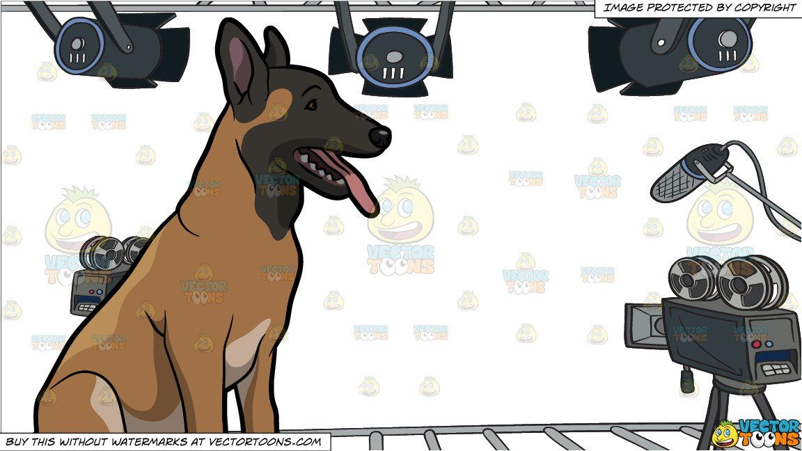 A calm belgian malinois sitting down and video studio