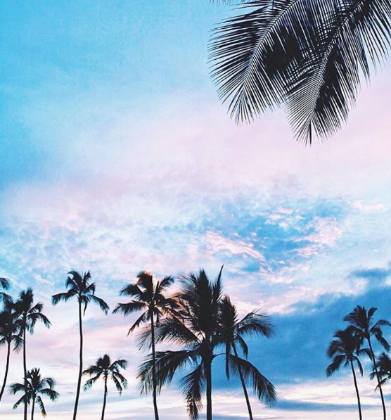 Palm Tree Iphone Wallpaper: @lumiereprincess ™� ˜�