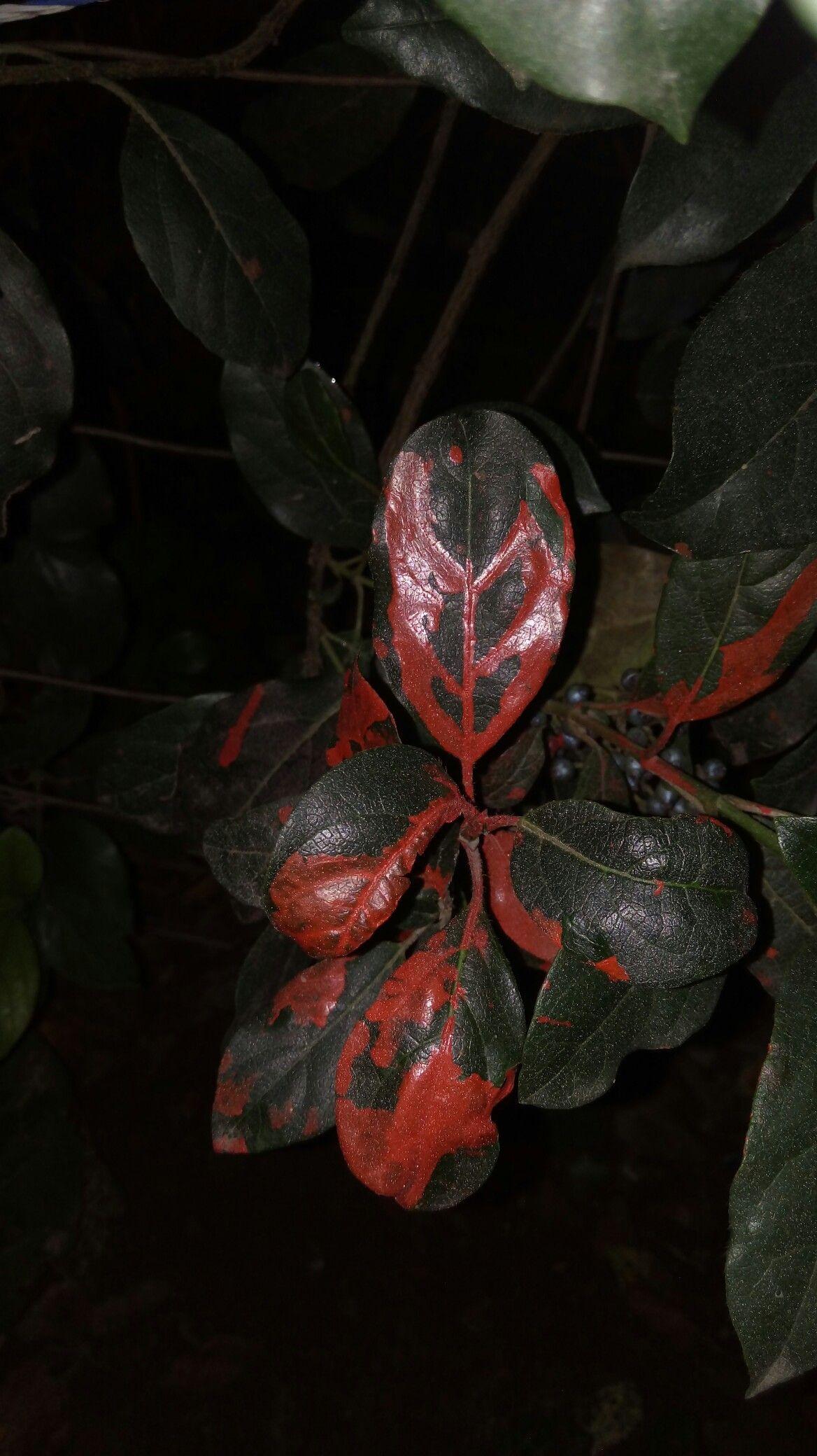 #art art #redqueen red queen's been here