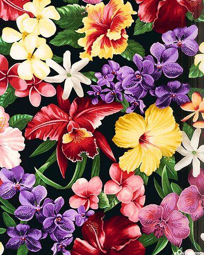 Colores Tropicales