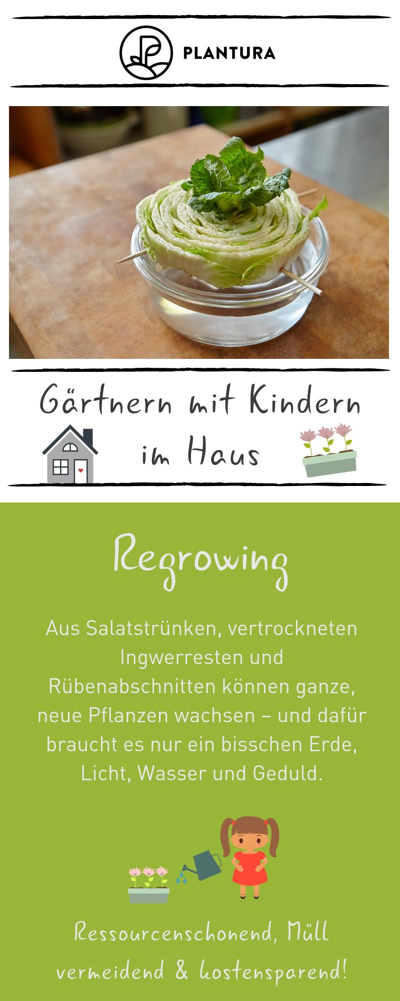 Gärtnern mit Kindern im Haus: Regrowing & andere Inspirationen - Plantura