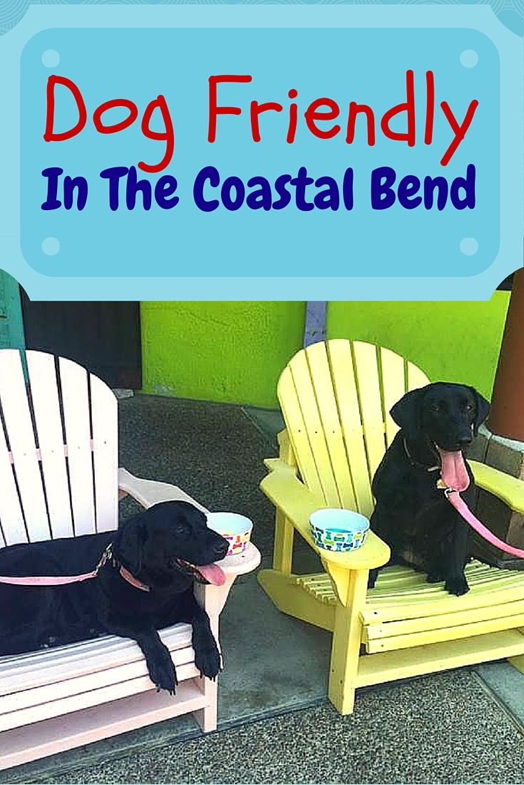 Best Places In Corpus Christi To Take Your Dog Family Fun