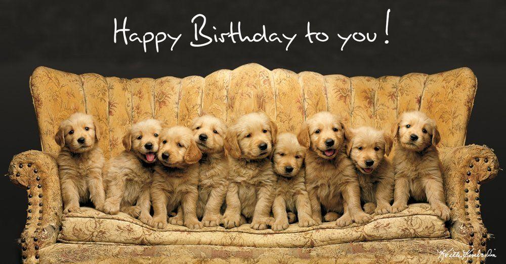 Keith Kimberlin On Sofa Panoramic Card Birthday Card Dogs Golden