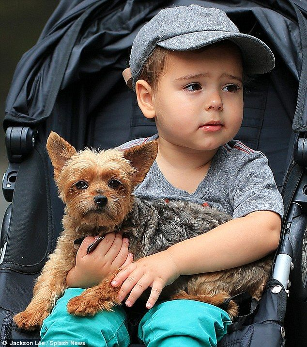 """Seriously cute: Little Flynn took on the responsibility of holding onto Yorkshire Terrier """"Frankie"""" - July 2013"""