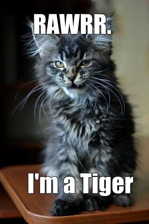 Tiger Kitty Meme Slapcaption Com Things That Make You