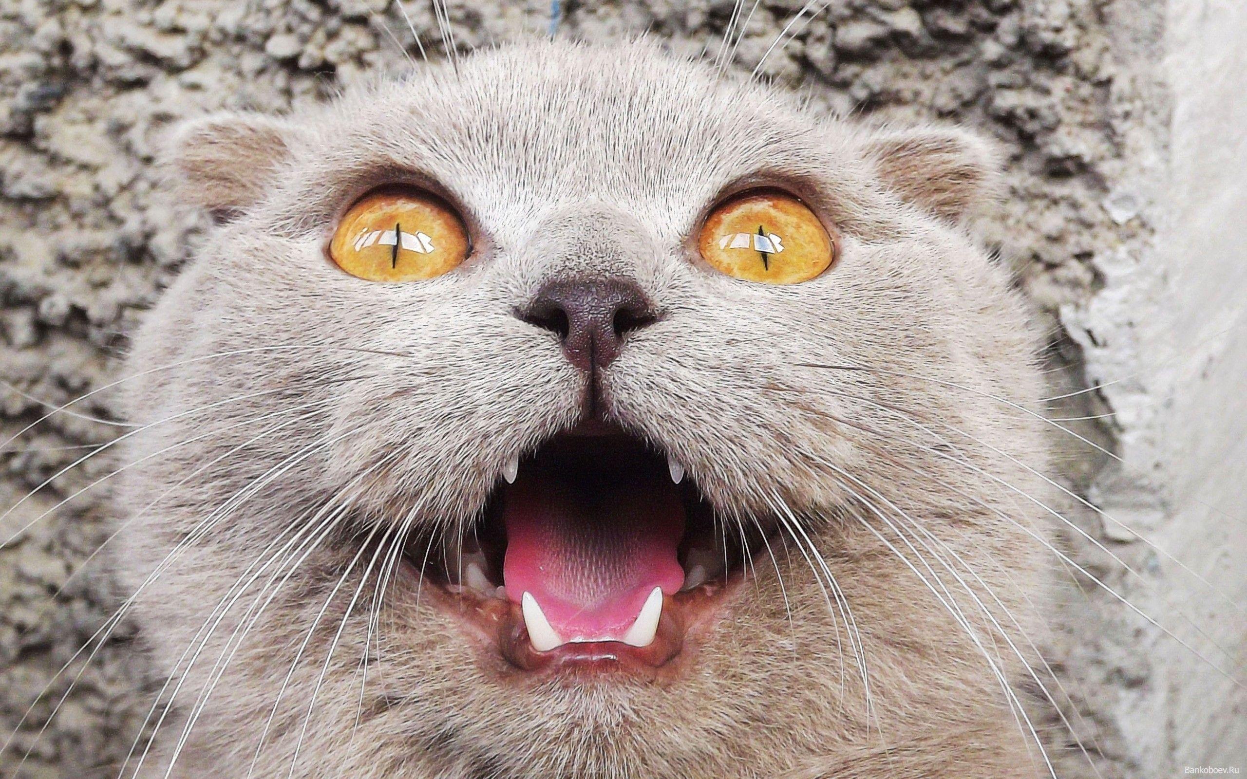 картинки с ржачными котятами вилкова другие презентации