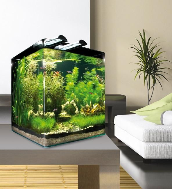 dennerle nano cube 60l akv rium freshwater aquarium aquarium a cube. Black Bedroom Furniture Sets. Home Design Ideas