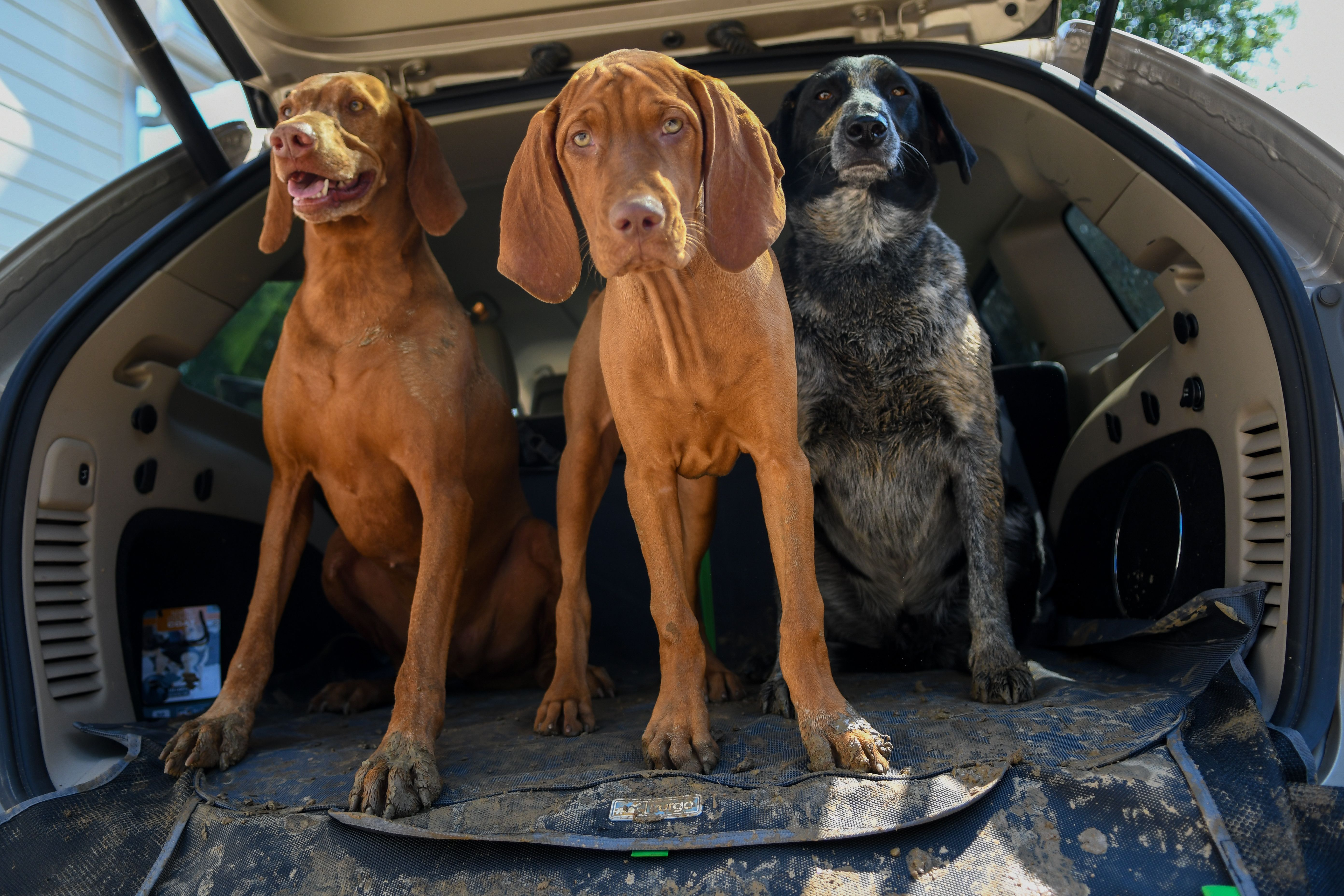 Are You Protecting Your Car From Muddy Paws Check Out Our Full