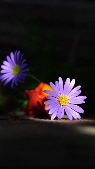 Still Life Flores Lindas Arranjos De Flores Flores