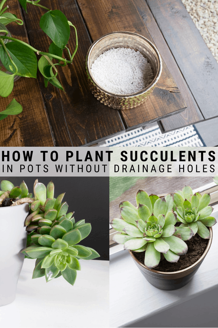 How To Plant Succulents In Pots Without Drainage Holes In 2020 Succulents Plants Repotting Succulents