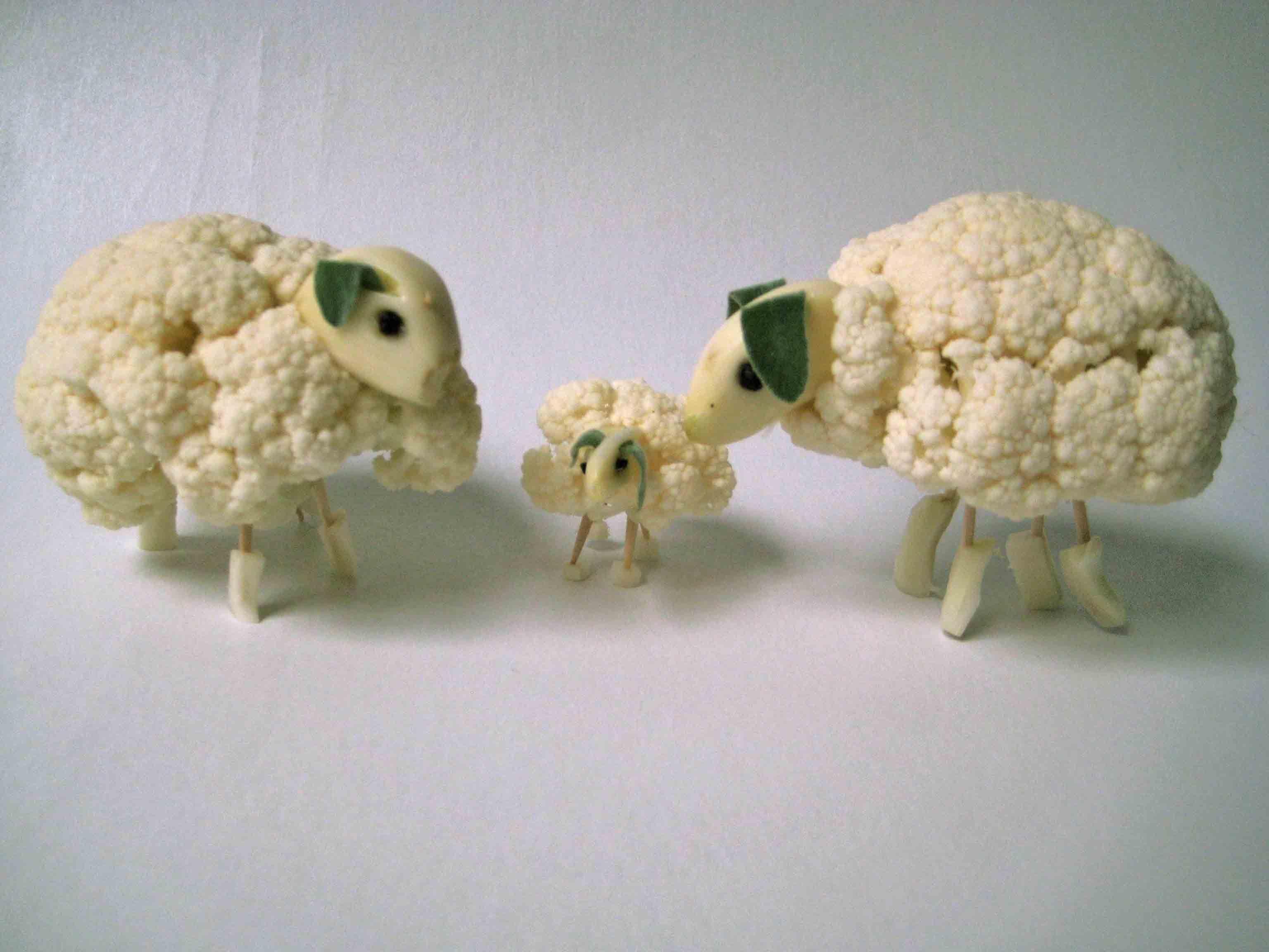 cauliflower sheep family