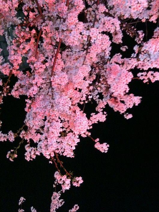 Pin By Ellen Cada On Ellen Beautiful Pink Flowers Cherry Blossom Cherry Blossom Tree