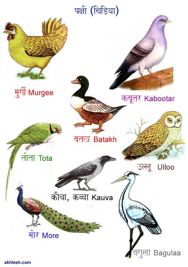 Birds Images With Name For Kids