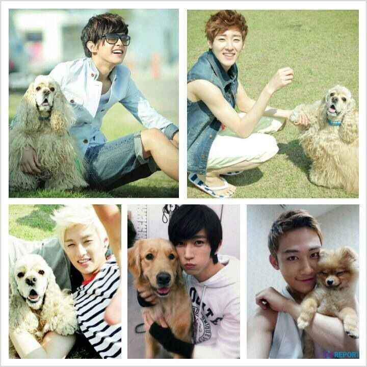 Image result for kpop Ukiss and their pets