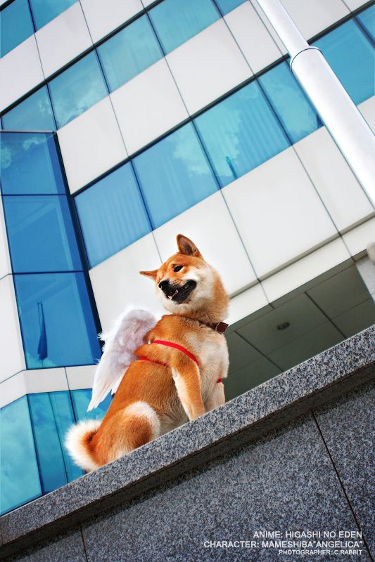 Popular Shiba Inu Anime Adorable Dog - 2438f5a01db851aeeeb0c43614059bec  You Should Have_684489  .jpg